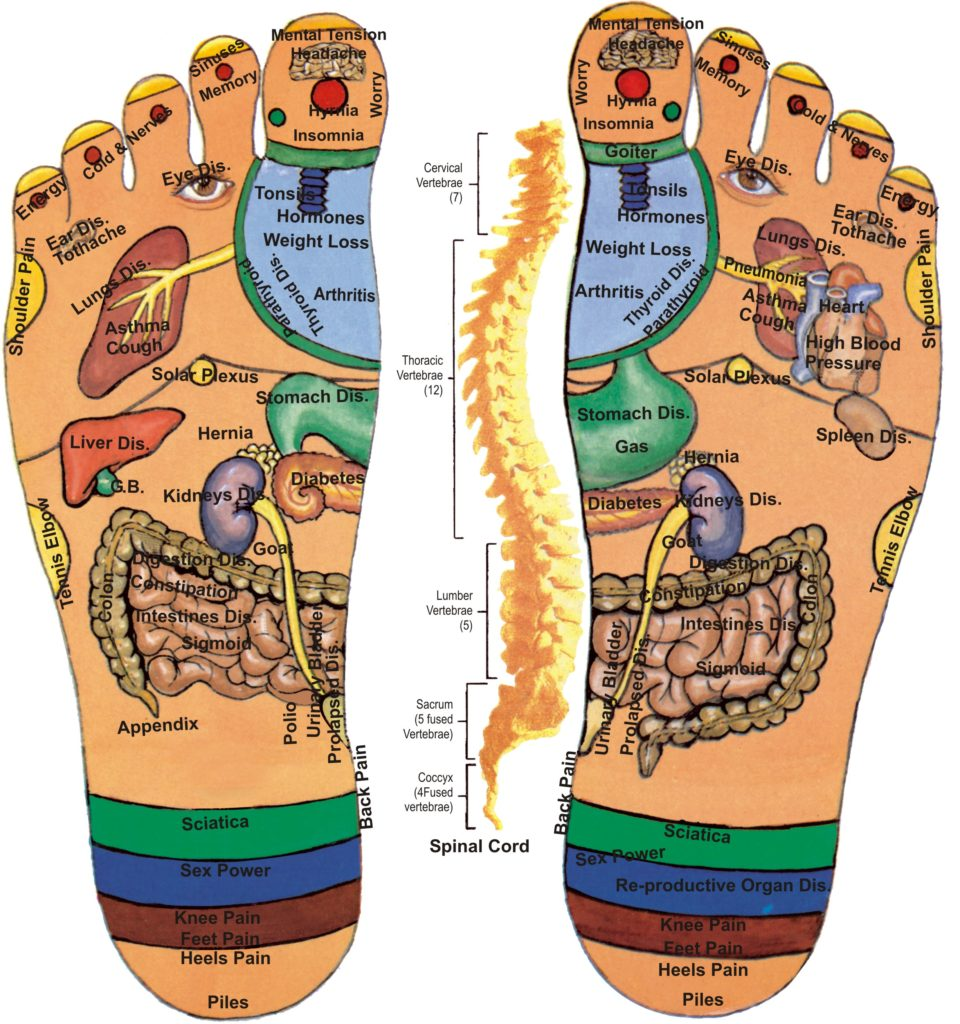 Alex Rey Holistic Terapies Reflexology Excretory Mapping