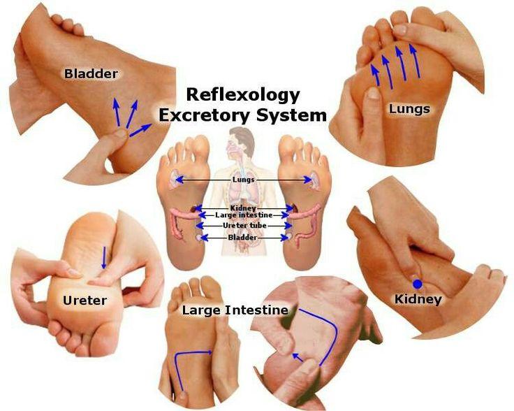 Alex Rey Holistic Terapies Reflexology Excretory System